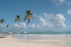 Palmeras en la playa Foto de archivo libre de regalías