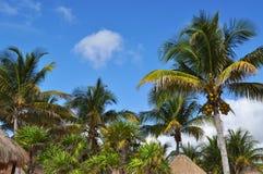 Palmeras en la playa Imágenes de archivo libres de regalías