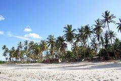 Palmeras en la playa Imagen de archivo libre de regalías