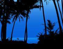 Palmeras en la playa. Fotos de archivo libres de regalías