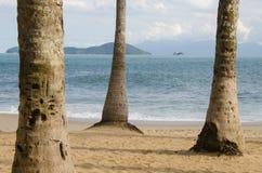 Palmeras en la playa Fotografía de archivo libre de regalías