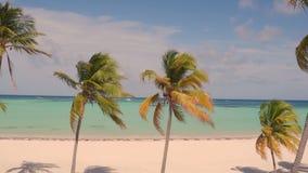 Palmeras en la playa Fotos de archivo libres de regalías