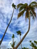 Palmeras en la playa arenosa foto de archivo libre de regalías