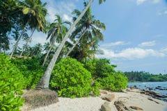 Palmeras en la playa arenosa oceánica con las ondas tranquilas Paisaje tropical con el borrachín del verde Fotografía de archivo