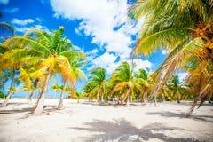 Palmeras en la playa blanca de la arena Fotografía de archivo