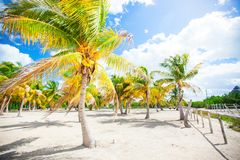 Palmeras en la playa blanca de la arena en la isla Foto de archivo