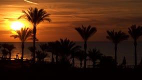 Palmeras en la playa contra el contexto del sol naciente metrajes