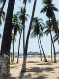 Palmeras en la playa de Acapulco Imágenes de archivo libres de regalías