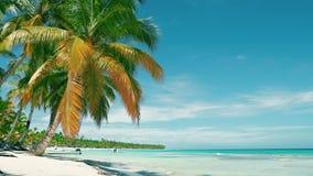 Palmeras en la playa de la isla caribeña Cielo azul y arena del mar y blanca almacen de video