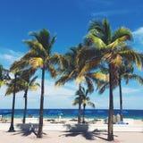 Palmeras en la playa de la Florida Imagen de archivo libre de regalías
