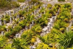 Palmeras en la playa de la isla de Cayo largo, Cuba Imagen de archivo libre de regalías