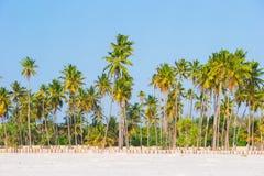 Palmeras en la playa de Sandy blanca Foto de archivo libre de regalías