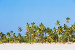 Palmeras en la playa de Sandy blanca Imágenes de archivo libres de regalías