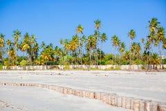 Palmeras en la playa de Sandy blanca Fotografía de archivo libre de regalías