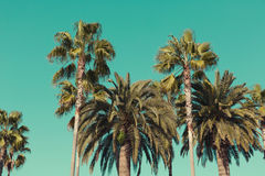 Palmeras en la playa de Santa Monica Fotos de archivo