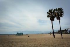 Palmeras en la playa, en la playa de Venecia Fotos de archivo libres de regalías