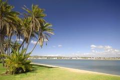 Palmeras en la playa en San Diego Imagenes de archivo