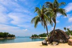 Palmeras en la playa hermosa Imágenes de archivo libres de regalías