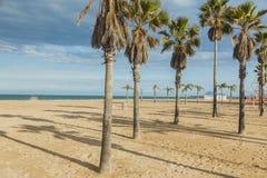 Palmeras en la playa Puesta del sol Fotografía de archivo