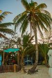 Palmeras en la playa en la puesta del sol Boracay, Filipinas Fotos de archivo libres de regalías