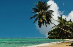 Palmeras en la playa real. Imagen de archivo libre de regalías