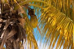 Palmeras en la playa Playa Sirena, Cayo largo, Cuba Copie el espacio para el texto Primer Imágenes de archivo libres de regalías