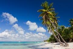 Palmeras en la playa tropical Foto de archivo libre de regalías