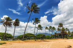 Palmeras en la playa tropical en Haleiwa foto de archivo libre de regalías