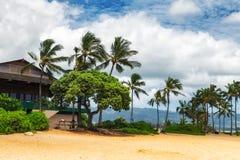 Palmeras en la playa tropical en Haleiwa fotografía de archivo libre de regalías