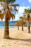 Palmeras en la playa tropical Teresitas, Tenerife, islas Canarias Imágenes de archivo libres de regalías