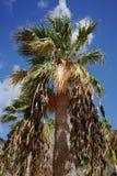 Palmeras en la playa tropical Teresitas, Tenerife, islas Canarias Foto de archivo