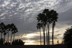 Palmeras en la puesta del sol Fotos de archivo libres de regalías