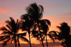 Palmeras en la puesta del sol Fotografía de archivo libre de regalías