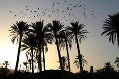 Palmeras en la puesta del sol Imagen de archivo libre de regalías