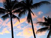 Palmeras en la puesta del sol imágenes de archivo libres de regalías