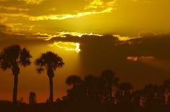 Palmeras en la puesta del sol Imagen de archivo