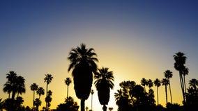 Palmeras en la puesta del sol Fotografía de archivo