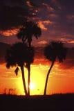 Palmeras en la puesta del sol Foto de archivo libre de regalías