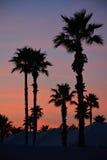 Palmeras en la puesta del sol Imagenes de archivo