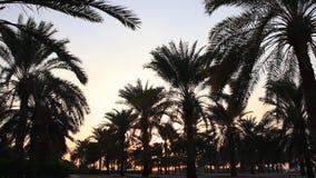 Palmeras en la puesta del sol en un parque de la ciudad almacen de video