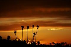 Palmeras en la salida del sol Fotos de archivo libres de regalías