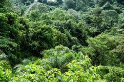 Palmeras en la selva tropical Fotos de archivo
