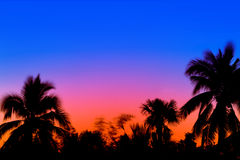 Palmeras en las salidas del sol Imagen de archivo