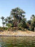 Palmeras en los bancos del Nilo Fotografía de archivo libre de regalías