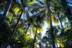 Palmeras en luz del sol caliente Imagenes de archivo