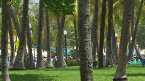 Palmeras en Miami Beach almacen de video