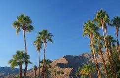 Palmeras en Palm Spring Imágenes de archivo libres de regalías
