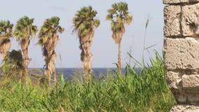 Palmeras en paraíso tropical de la isla caribeña almacen de video