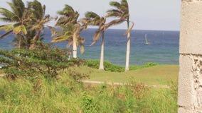 Palmeras en paraíso tropical de la isla caribeña almacen de metraje de vídeo