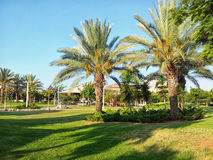Palmeras en parque israelí Fotos de archivo